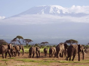 mount kilimanjaro climbing wildlife safaris travel tourism information tanzania 139 2 300x224 Mount Kilimanjaro